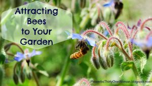 Attracting-Bees-to-Your-Garden-a